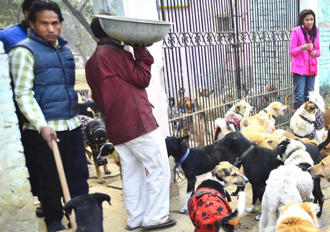 Abundance-Stray-Dogs-,Sanjana-Jon-at-Ashram-
