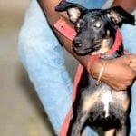 Deva rescued from Uttarakhand