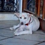 Gora suffered from Megaesophagus diseaseParanand Charitable Trust